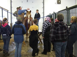 Draft Horse Clinic